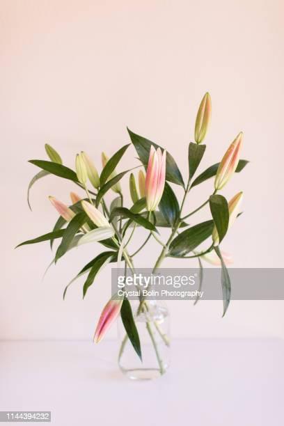 pink easter lilies - giglio foto e immagini stock