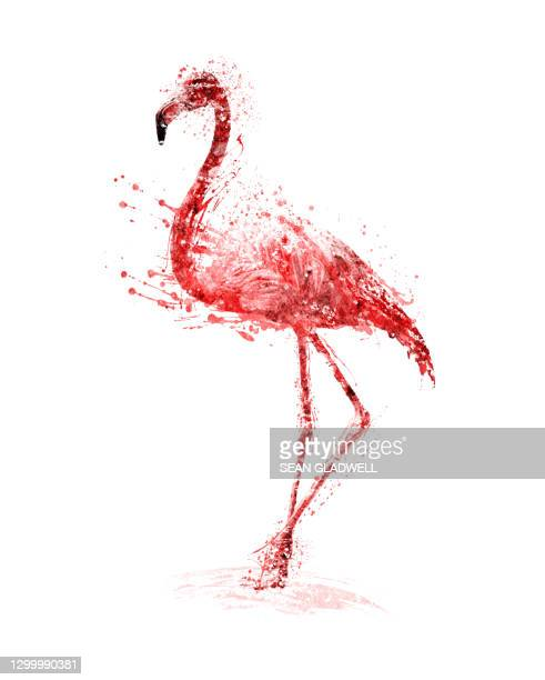 pink flamingo illustration - illustration stock pictures, royalty-free photos & images