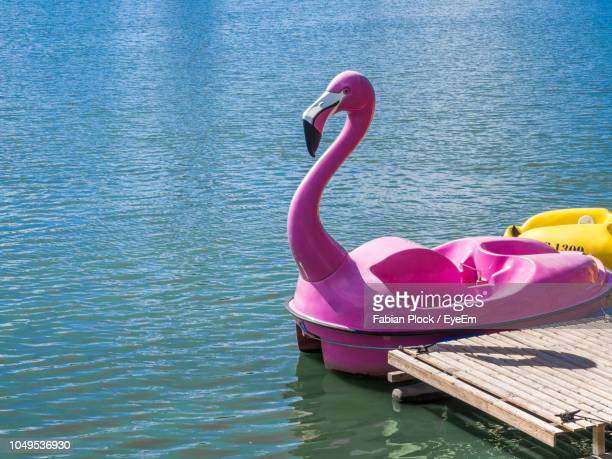 pink flamingo pedal boat floating on water in lake - pedal boat stock pictures, royalty-free photos & images