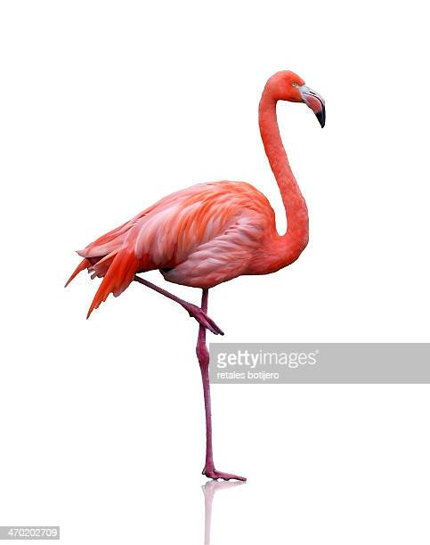 Flamingo Stock Photos And Pictures Getty Images