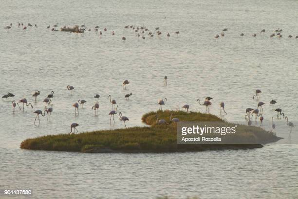 pink flamingos and island heart shape - flamingo heart stock pictures, royalty-free photos & images