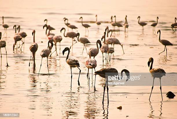 pink flamingos - dawn stock pictures, royalty-free photos & images