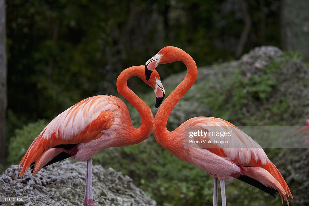 Q Comen Los Flamingos Pink Flamingos With He...