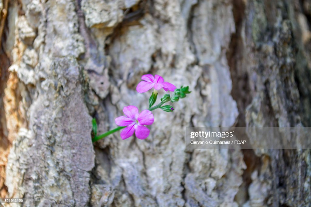 Pink flower growing on tree trunk : Stock Photo
