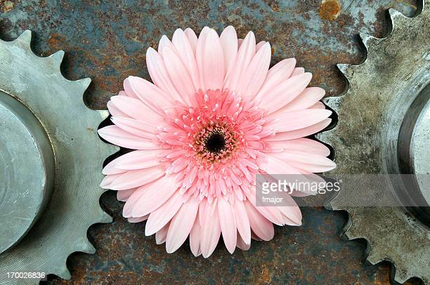 Pink flower in between of two rusted gears