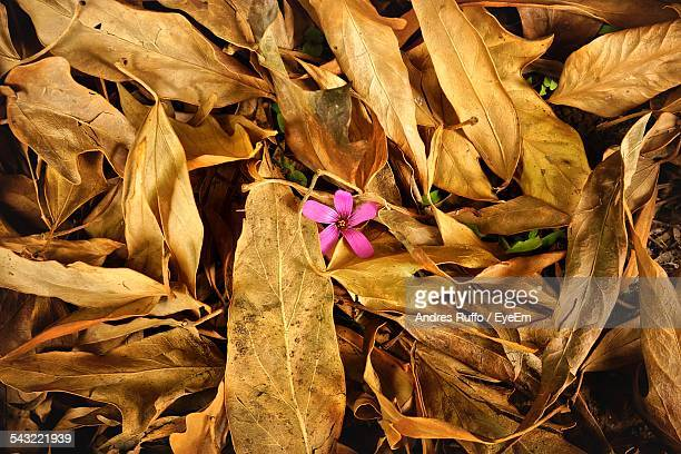 Pink Flower On Leaves Covered Field