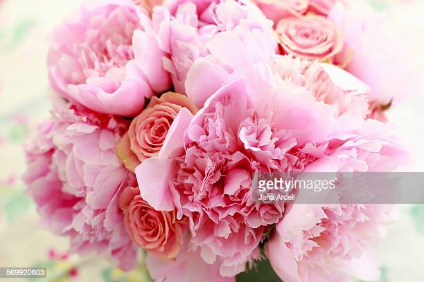 pink flower peony - jena rose stock pictures, royalty-free photos & images