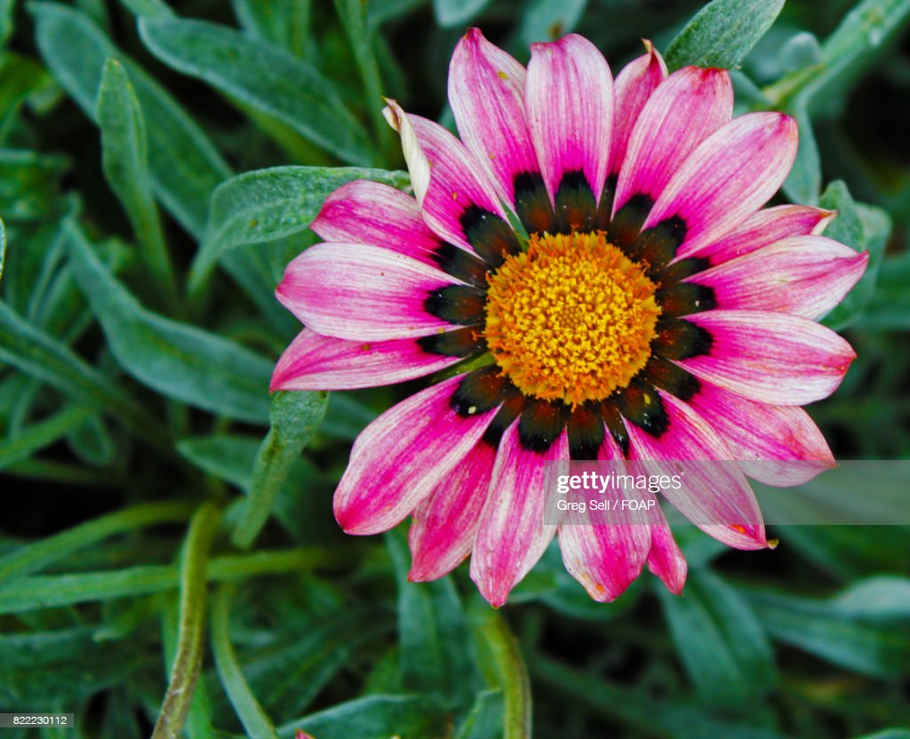 Pink flower plant : Stock Photo