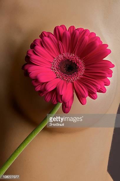 rosa flor estratégicamente ubicado sobre la mujer de mama - maya desnuda fotografías e imágenes de stock