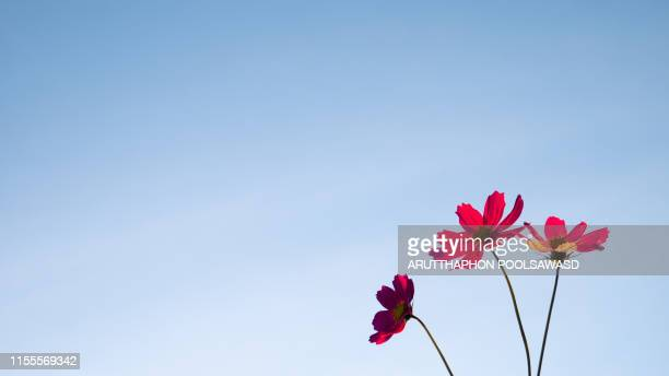 pink flower sunset for background design - saturated color stock pictures, royalty-free photos & images