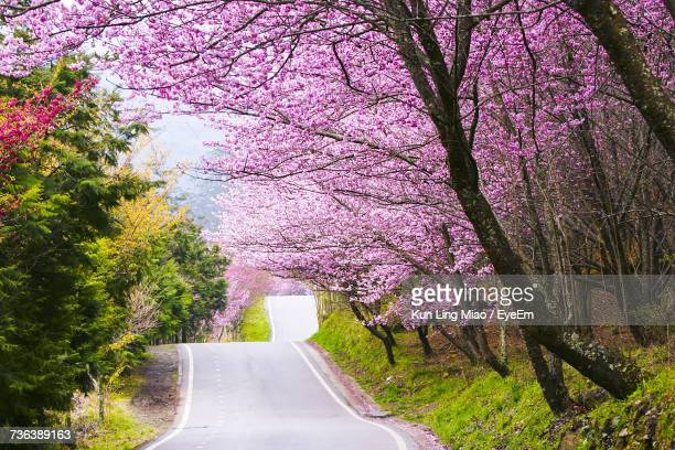Pink Flower Tree By Road Against Sky