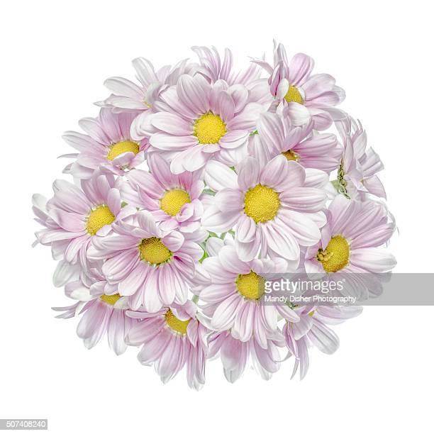 Pink flowered Chrysanthemum posy