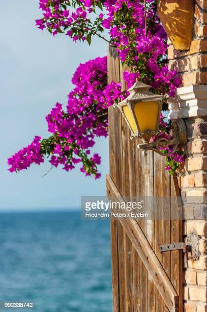 pink flowering plant by sea against sky - corfu stock pictures, royalty-free photos & images