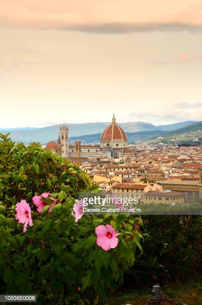 pink flowering plants and buildings against sky - florence italy stock pictures, royalty-free photos & images