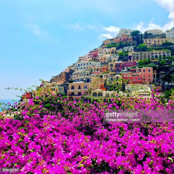 pink flowering plants by buildings against sky - tropical bush stock photos and pictures