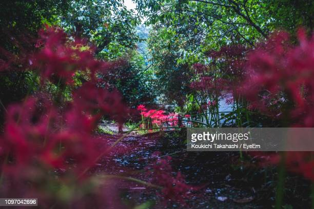 Pink Flowering Plants In Forest