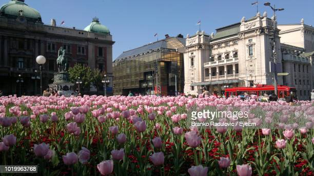 Pink Flowering Plants In Front Of Building