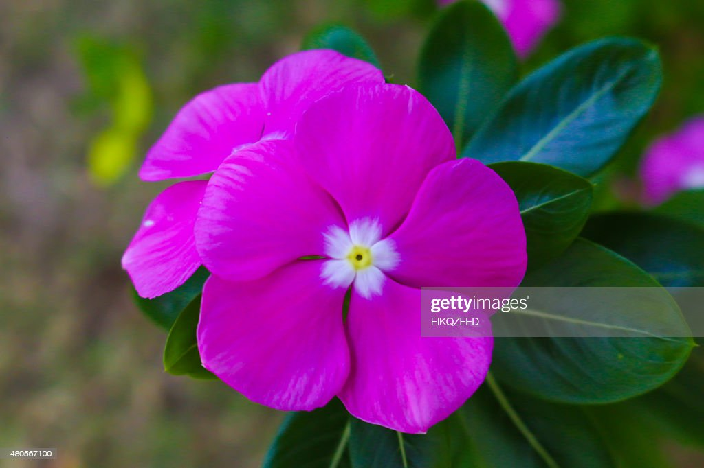 pink flowerload : Stock Photo