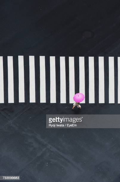 pink flowers against wall - zebra crossing stock pictures, royalty-free photos & images