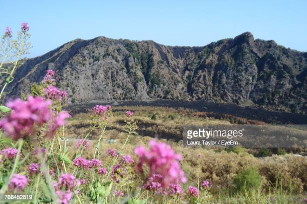 Pink Flowers Blooming On Field Against Mountains