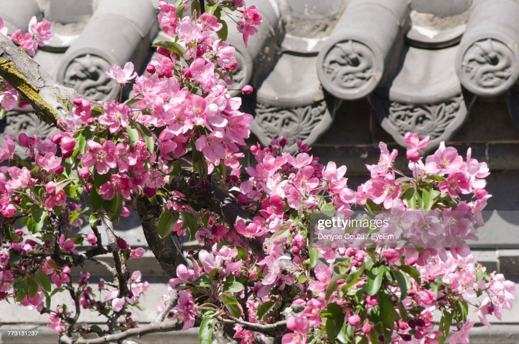 Pink Flowers Blooming Outdoors : Photo