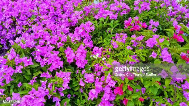 Pink Flowers Blooming Outdoors