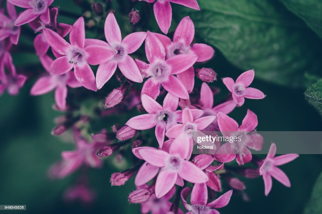 Pink flowers closeup stock photo getty images pink flowers close up mightylinksfo Gallery