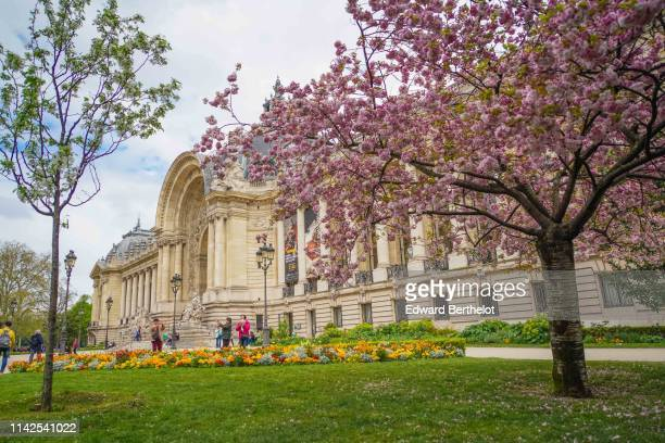 Pink flowers from Sakura cherry blossom trees are seen near the Grand Palais and the Petit Palais on April 9 2019 in Paris France