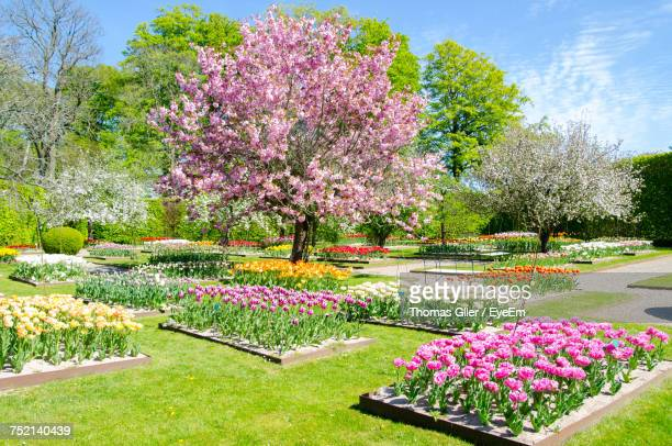 Pink Flowers In Park
