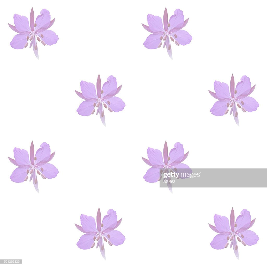 Pink Flowers On A White Background Wallpaper Stock Photo Getty Images