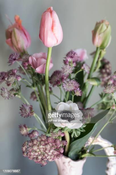 pink flowers - fiore di campo foto e immagini stock