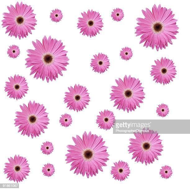 Pink flowers XXXL