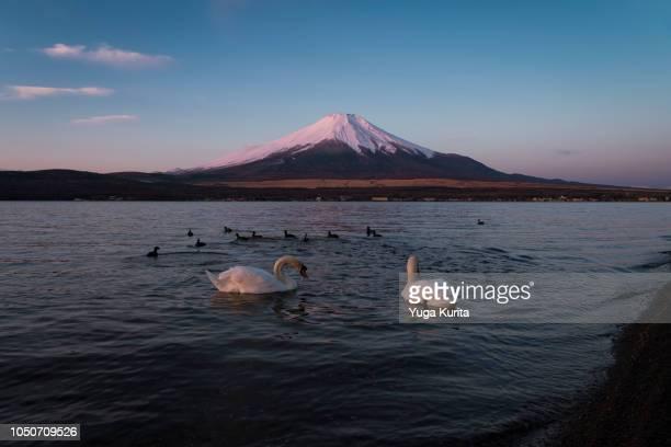 Pink Fuji over Lake Yamanaka at Sunrise