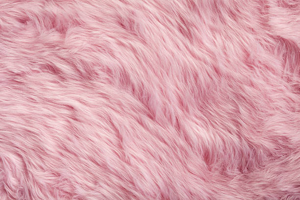 Free Pink Images Pictures And Royalty Free Stock Photos