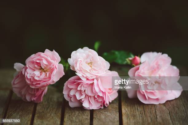 Pink garden roses on a wooden table