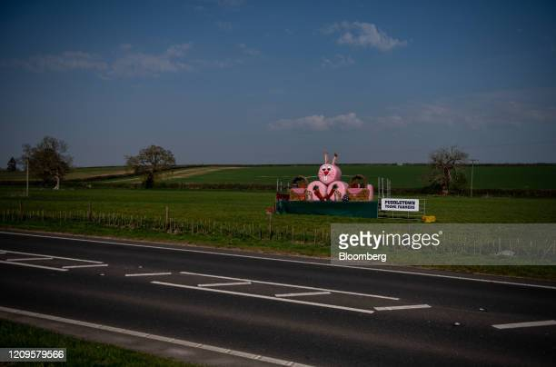 Pink hay bales crafted into an 'Easter bunny' display by Puddletown young farmers sit in a field beside an empty road during the national lockdown on...