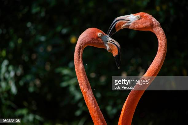 pink heart - flamingo heart stock pictures, royalty-free photos & images