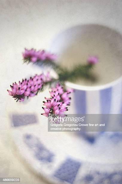 pink heather - gregoria gregoriou crowe fine art and creative photography stockfoto's en -beelden
