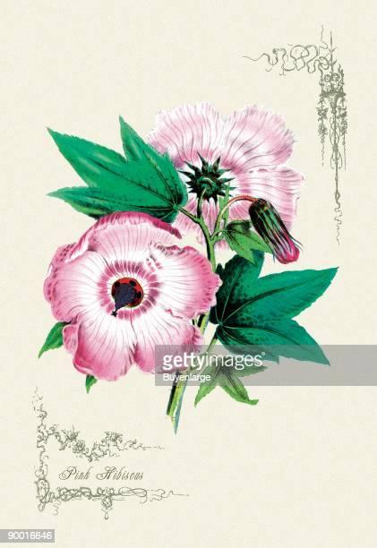 60 Top Hibiscus Flower Arrangements Pictures Photos Images