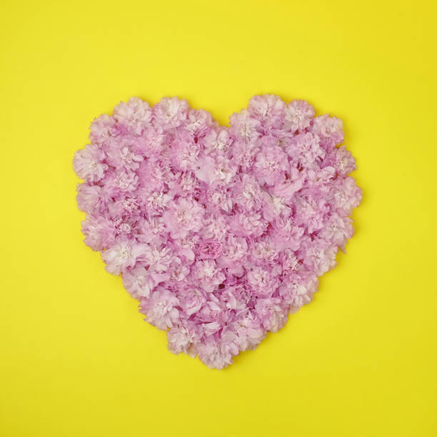 Pink Kwanzan cherry blossoms in the shape of a heart