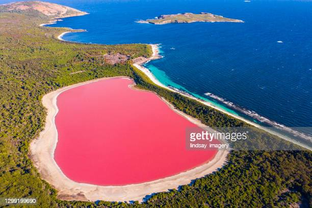 pink lake aerial view on middle island surrounded blue ocean. stark contrasting natural phenomenon - light natural phenomenon stock pictures, royalty-free photos & images