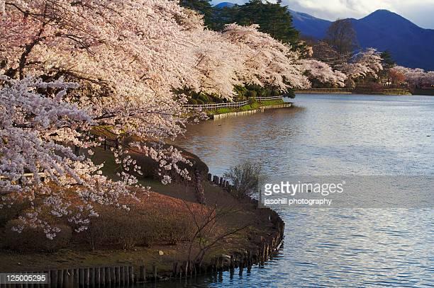 pink leaves along edge of lake - 盛岡市 ストックフォトと画像
