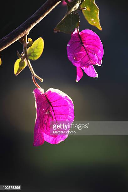 pink leaves - martial stock pictures, royalty-free photos & images