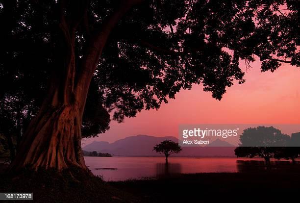 pink light and trees at sunset at amaya lake. - alex saberi stock pictures, royalty-free photos & images