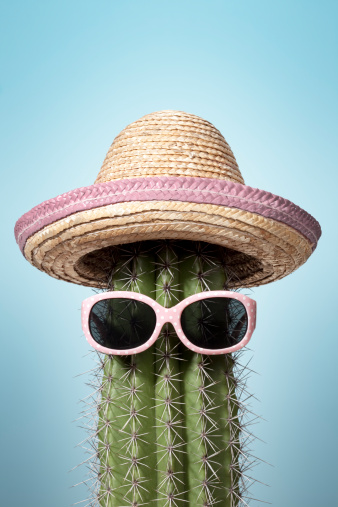 Pink mexico cactus. Summer Humor Heat Holiday Sunglasses Sombrero 157584045