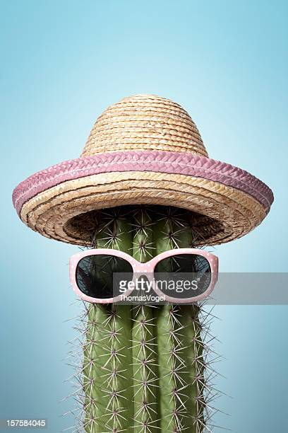 pink mexico cactus. summer humor heat holiday sunglasses sombrero - cactus stock pictures, royalty-free photos & images