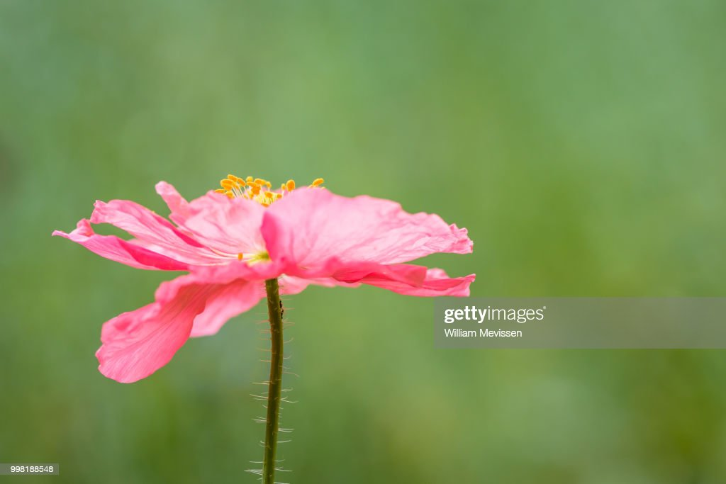 Pink On Green : Stockfoto