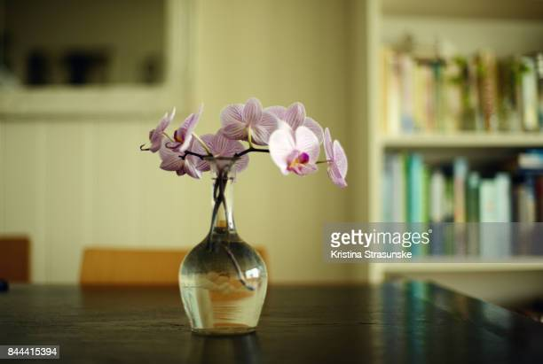 pink orchid in a vase