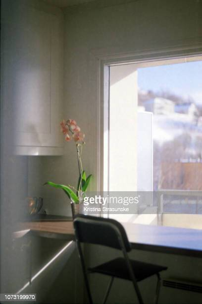 pink orchid on a table in a beautiful sunlight from a window - kristina strasunske stock photos and pictures