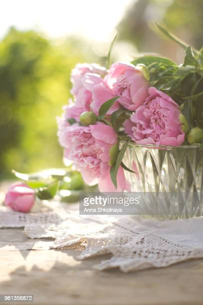 pink peonies in vase - doily stock photos and pictures